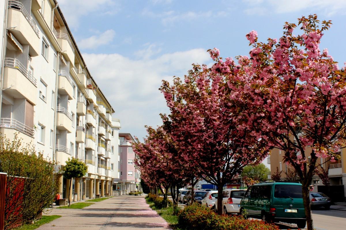 Javna dražba za oddajo tržnega stanovanja Občine Trzin v najem
