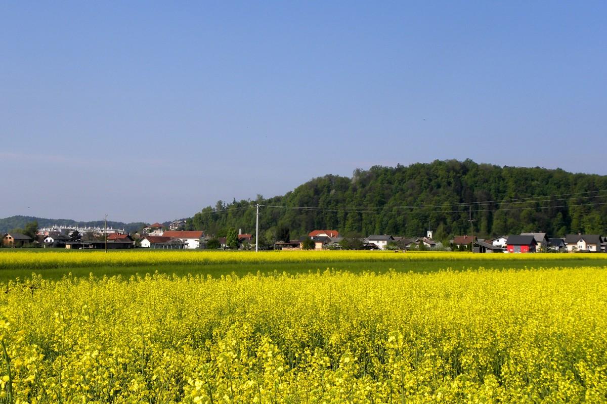 Zbiranje in odvoz ostankov zelenega odreza
